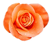 1200px-Orange_rose_extracted_edited.png