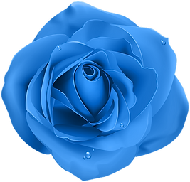Rose_Blue_Transparent_PNG_Clip_Art.png