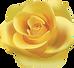 pngkit_yellow-roses-png_1868428.png
