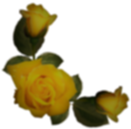Beautiful_Yellow_Roses_Decor_PNG_Image.p