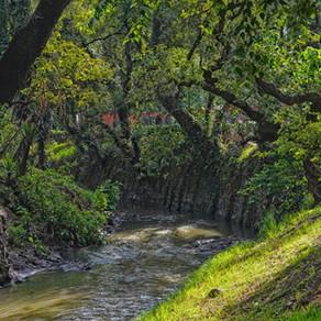 Limpieza del Río Magdalena