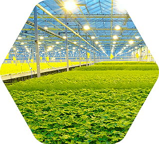 solutions-thmb-greenhouse-320.png