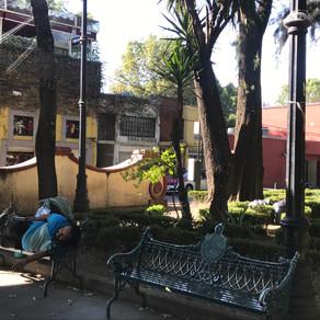 -CM- Jardín Centenario