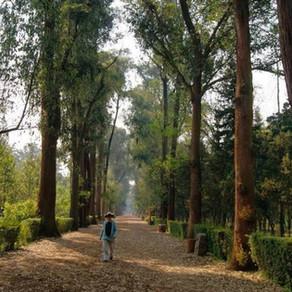 Un enemigo silencioso disfrazado de belleza: los árboles