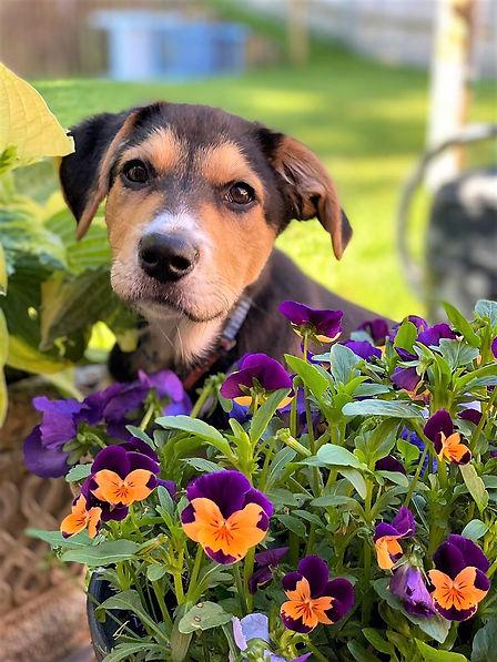Bruce and flowers.jpg