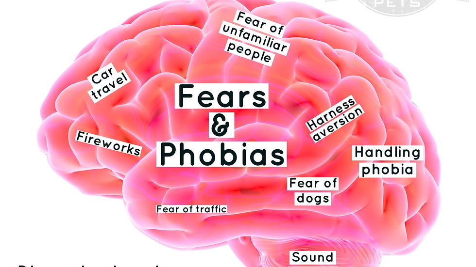 Online Fears & Phobias Webinar