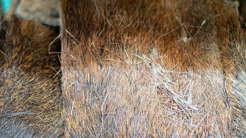 Hair on Venison Skin