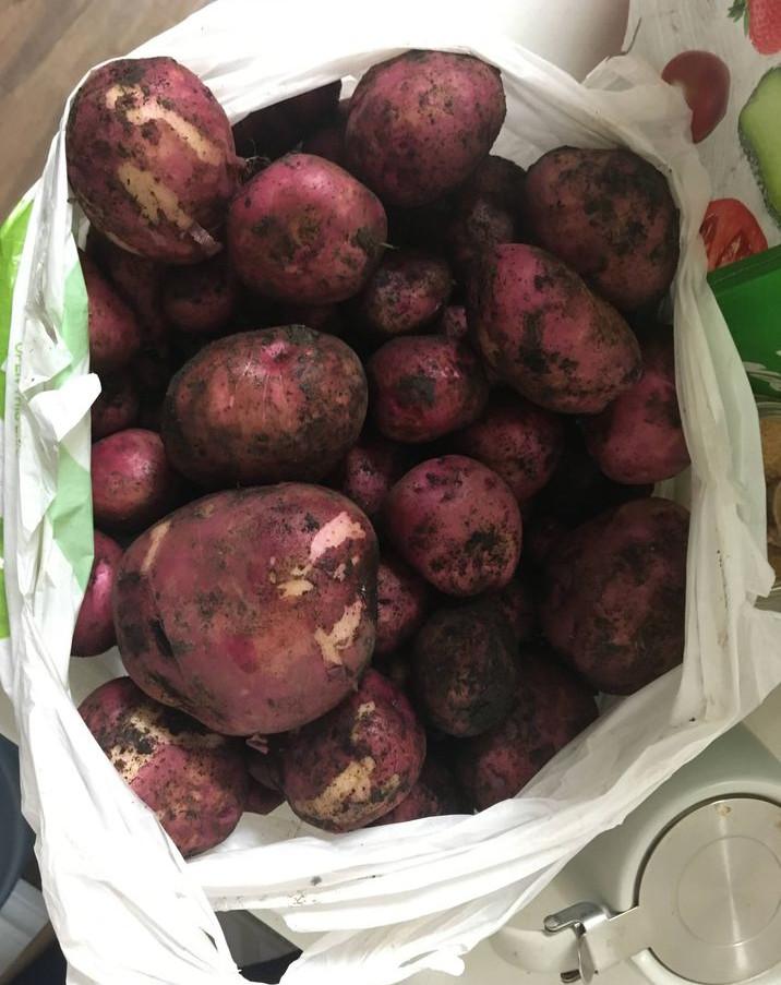 5 Potato.jpg