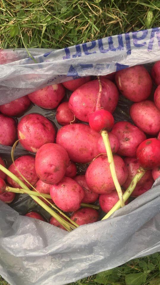 4 Potato.jpg