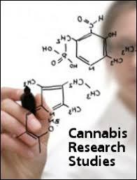 Cannabis Research Studies
