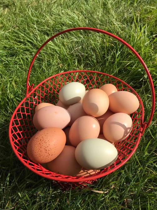 Eggs700.jpg
