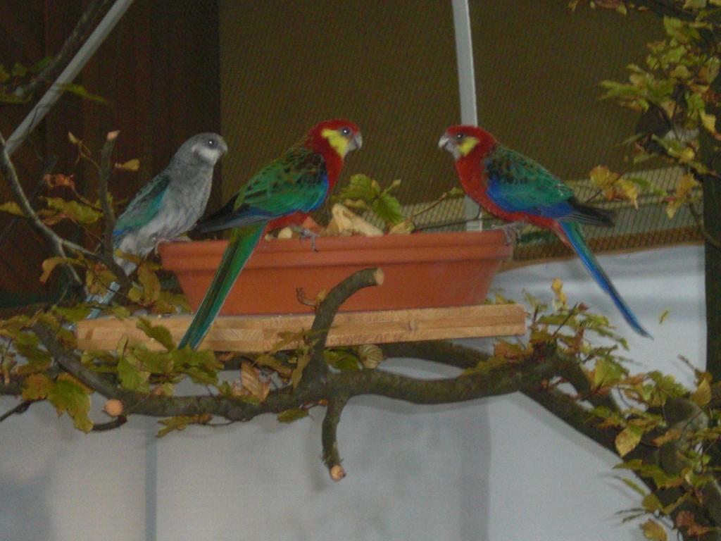 Vögel am Futternapf