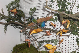 Vogelausstellung 3/4.11.2018 Lauchringen