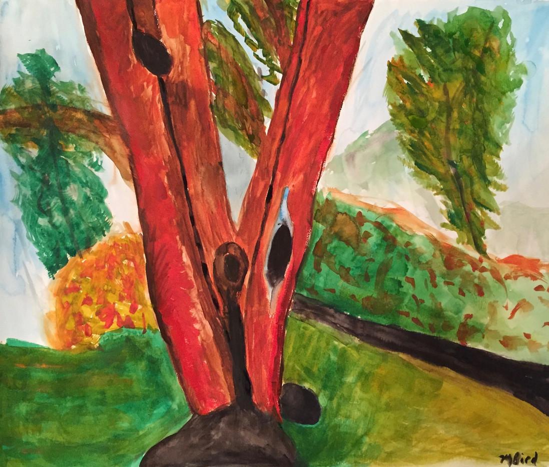 The Arbutus Tree