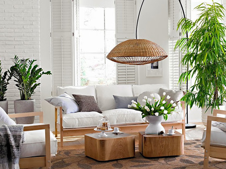 5 plantas para limpiar el aire de tu casa