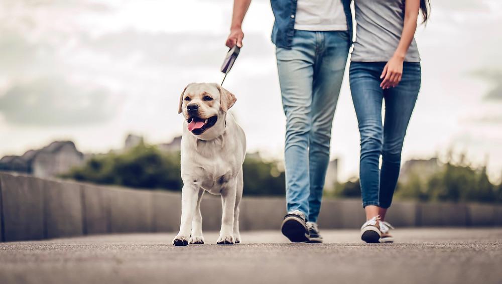 Saca a pasear a tu perro todos los días