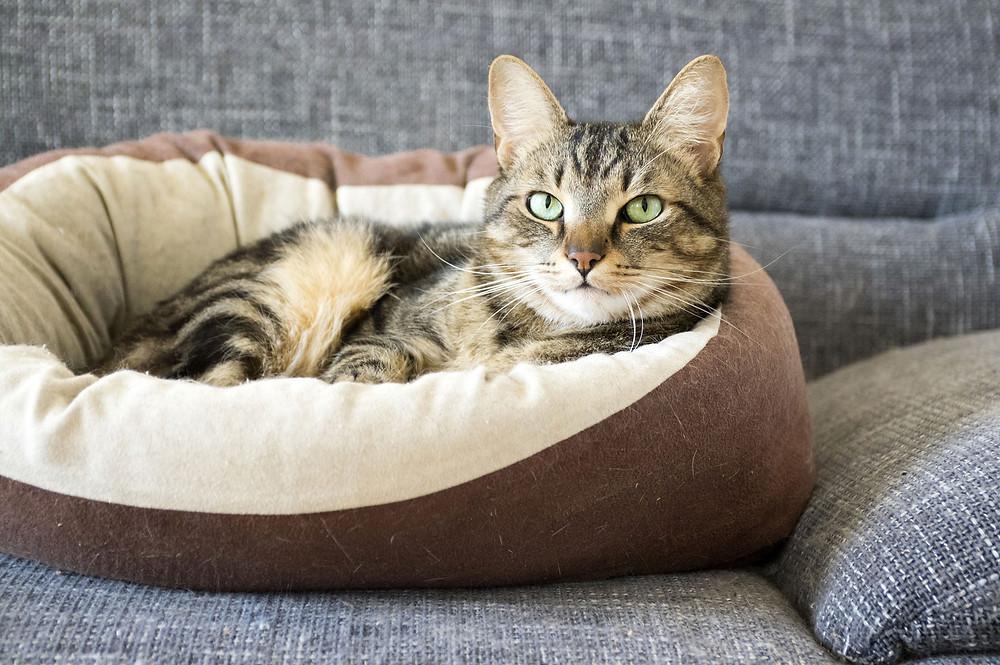 Las mascotas necesitan su propio espacio en el hogar