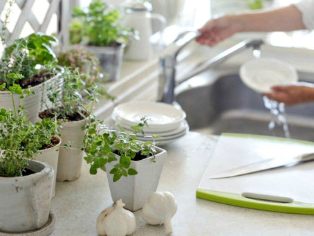 7 plantas para sembrar en casa