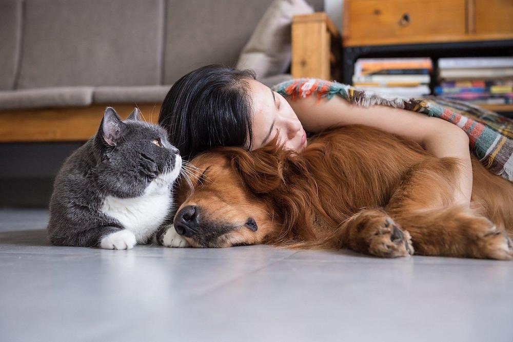 Una mascota es responsabilidad de toda la familia