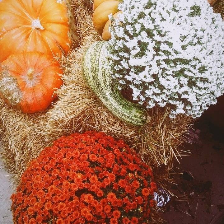 fall decor, pumpkins, spanish learning, spanish podcast, spanish vocab