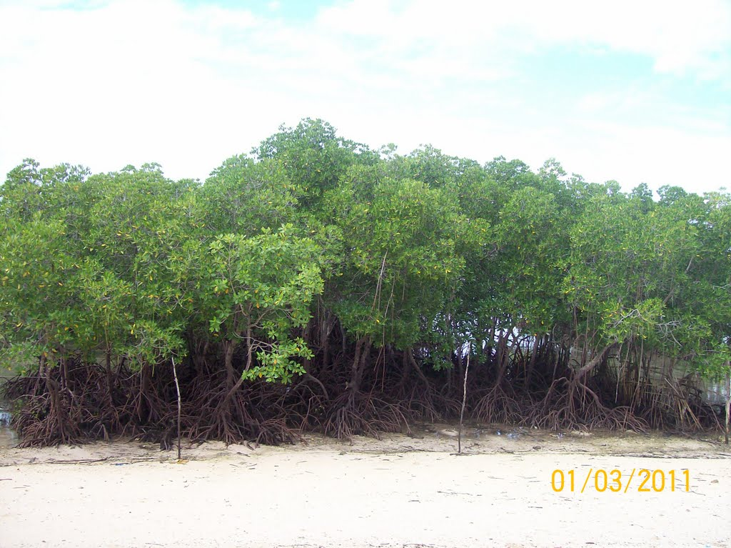 Calape Group of Islands Mangrove