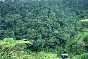 Rungkunan National Park