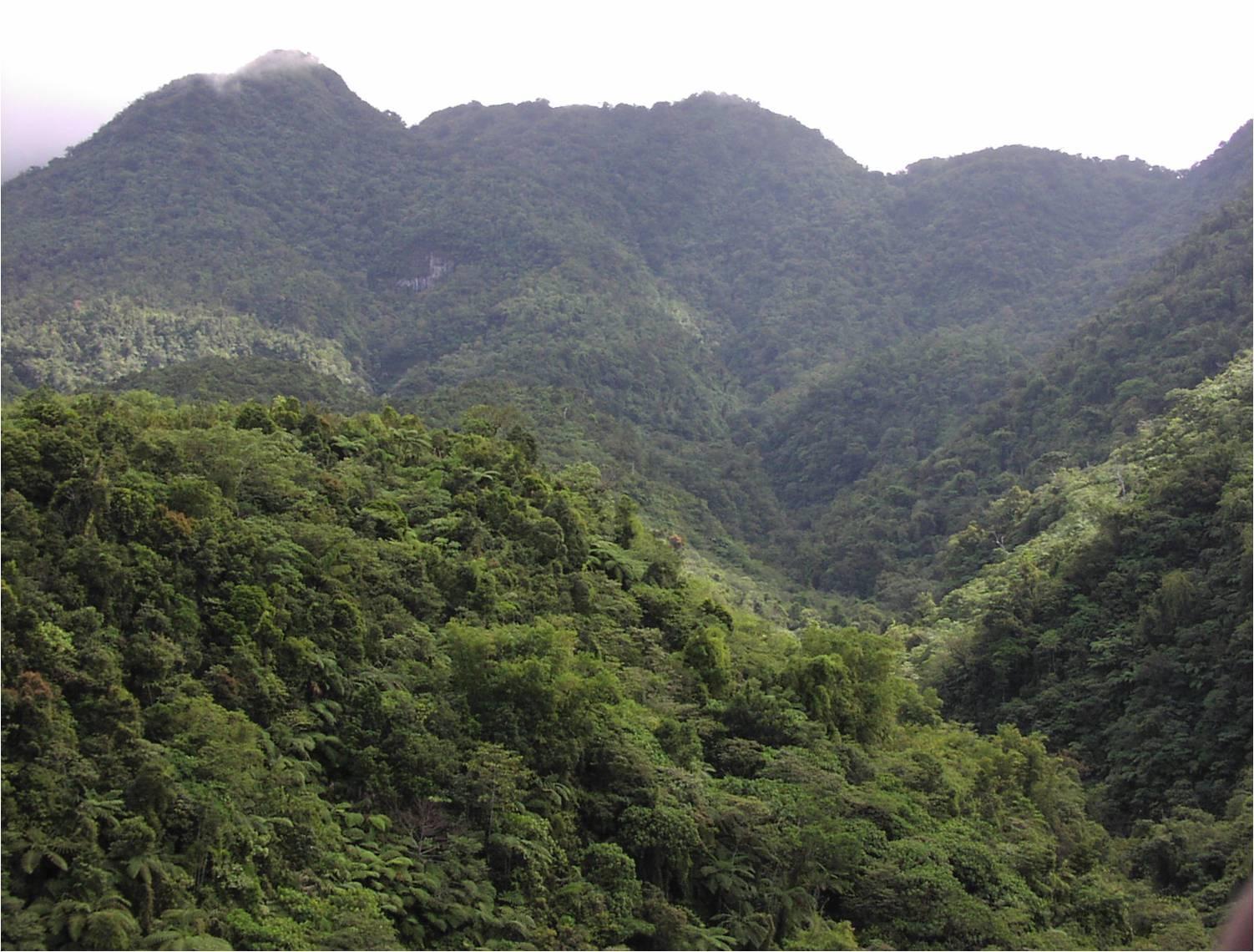 Northern Negros Natural Park