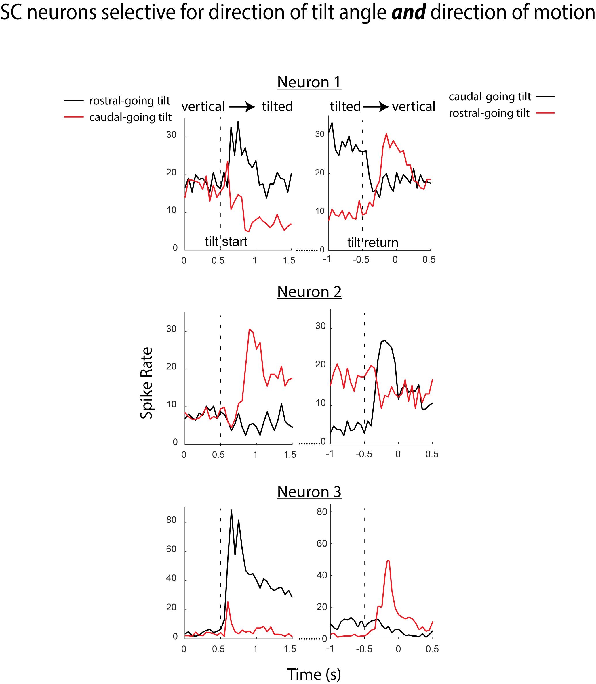 SC global motion selectivity