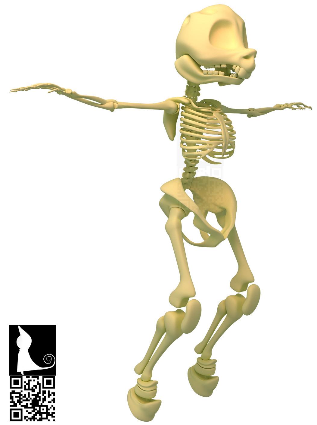 Sugers Skeleton.jpg