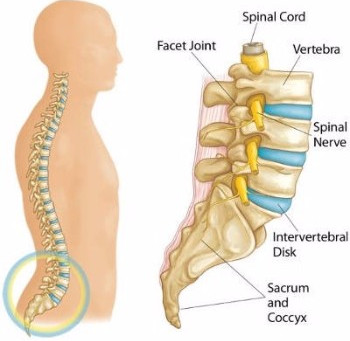 The FOUR most common types of lower back pain