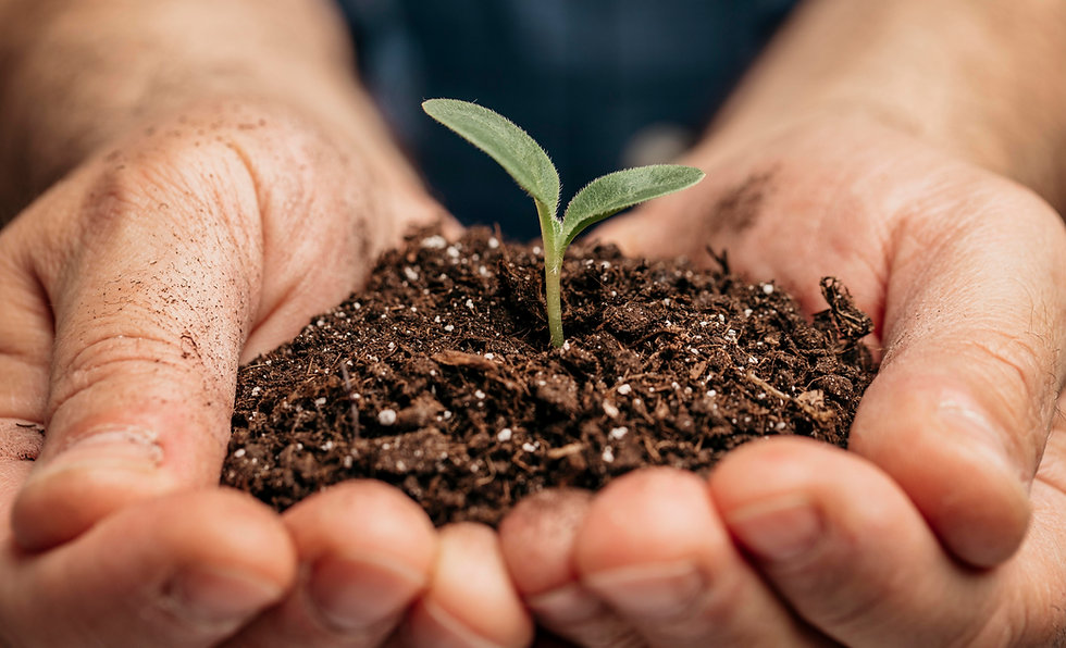 close-up-of-male-hands-holding-soil-and-little-plant.jpg