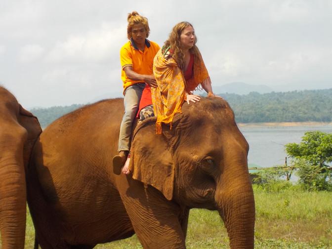 Rencontrer en amitié avec les éléphants
