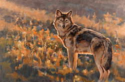 Second Season - Wolf