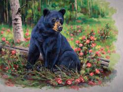 Bed of Roses - Black Bear
