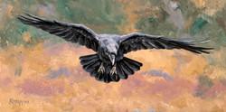 Incoming - Raven