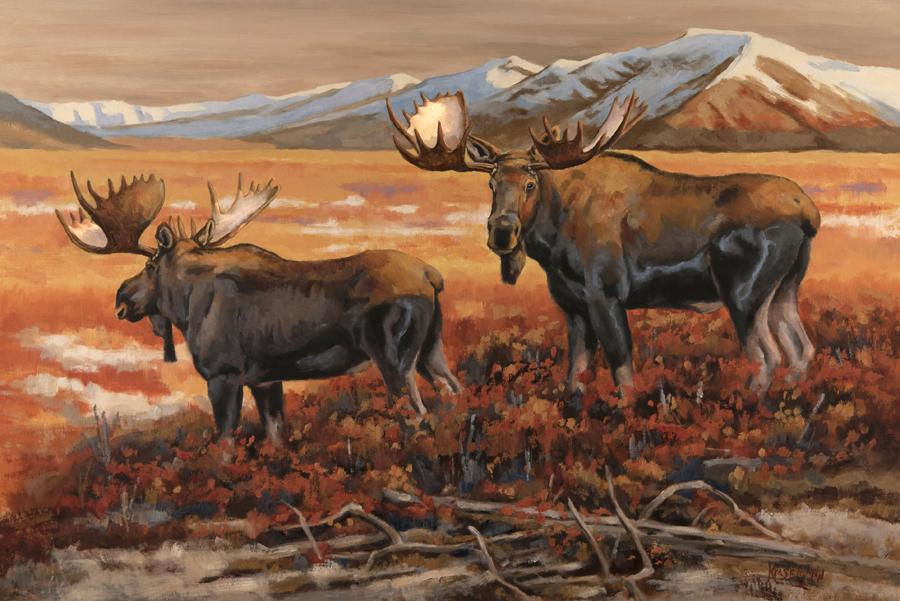 Big Moose Country 20 x 30