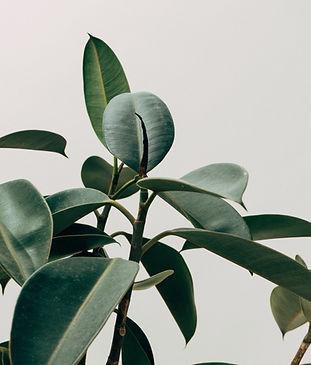 green-leafed-indoor-plant-1048035.jpg