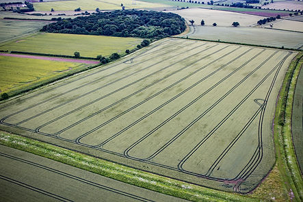 Black grass inspection from the Air using high quality camera