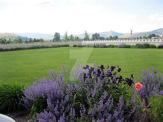 garden of 1000 Buddhas. lavendar gardens
