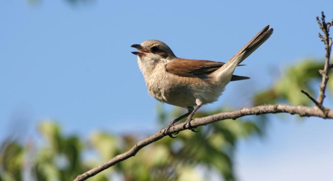 אם תעוף הציפור, לא ישיר עוד שירים?