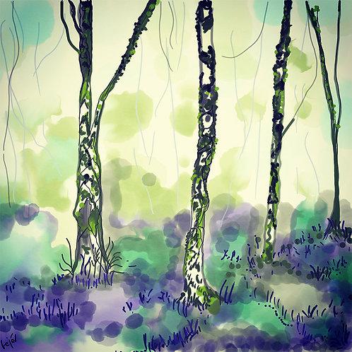 Scottish Bluebells