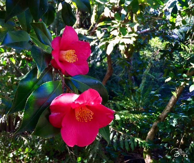 Bloomin Rubies.