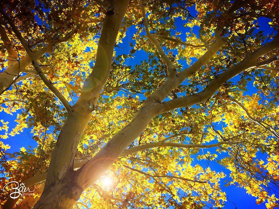 Sedona Sun Spot