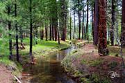 Huckleberry Stream