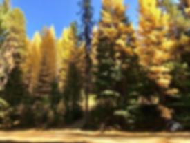 Golden Forest.jpeg