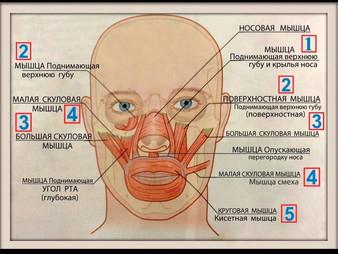 Причины появления носогубных складок и методы избавления от «линий скорби»