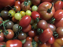 2017 Tomatoes.JPG