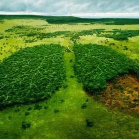 Il destino dell'Amazzonia nelle mani di Bolsonaro