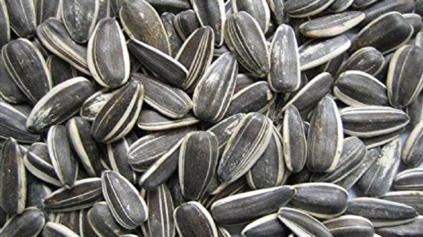 Sunflower Seeds (1kg)