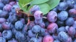 Organic Wild Blueberries (1kg)